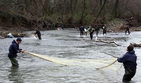 ممنوعیت صید ماهی در رودخانه های آستارا