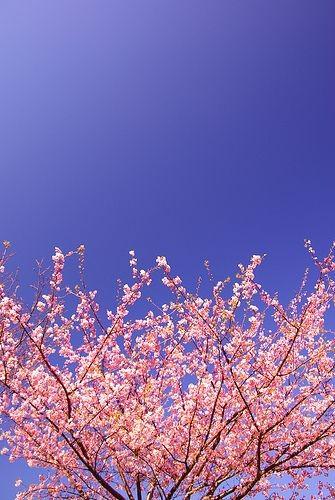 زیباکنار در فصل بهار