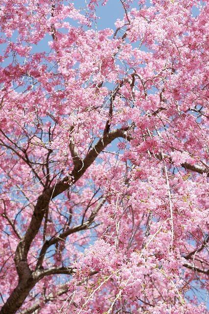 زیباکنار گیلان بهار 99