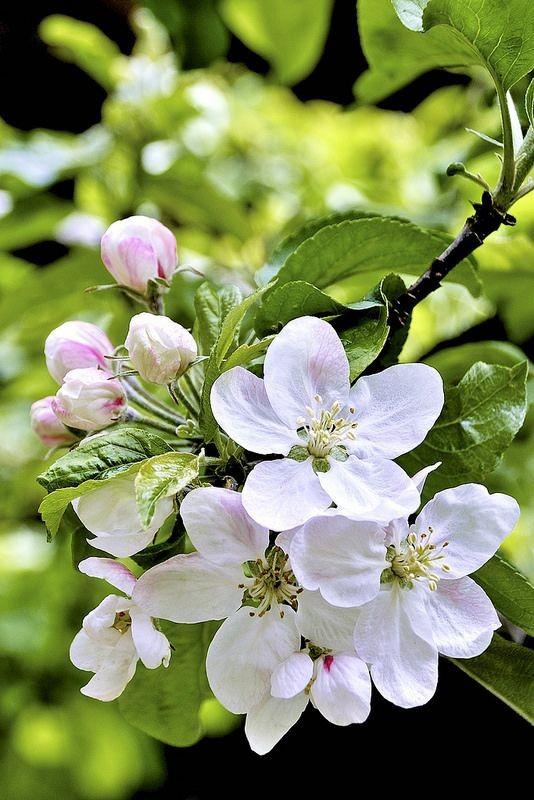 تصاویر زیبا از زیباکنار در فصل بهار