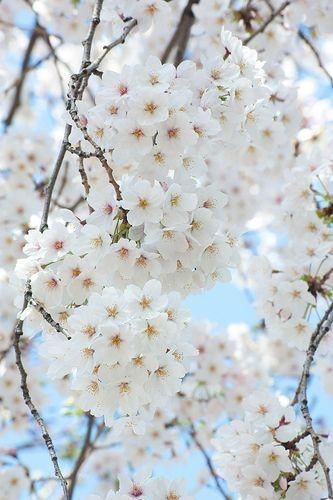بهار گیلان