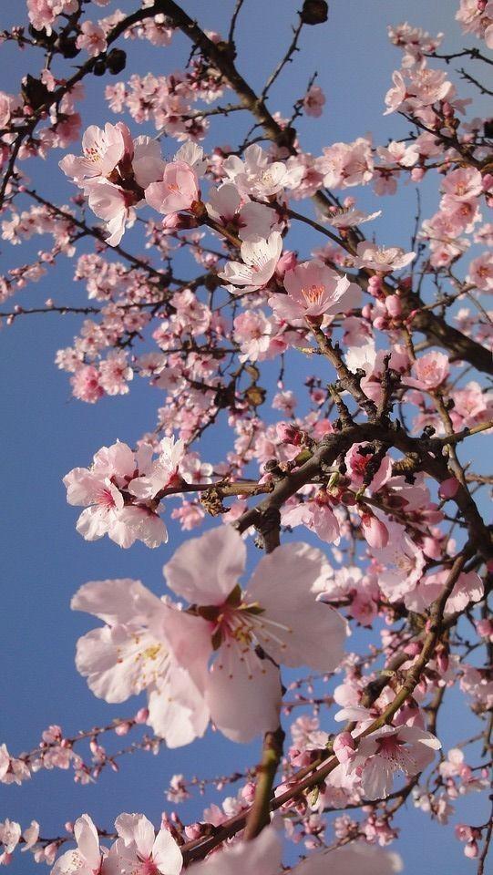 طبیعت زیباکنار در فصل بهار