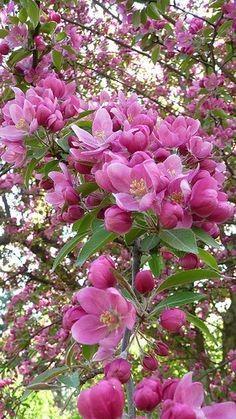 طبیعت بهاری زیباکنار گیلان