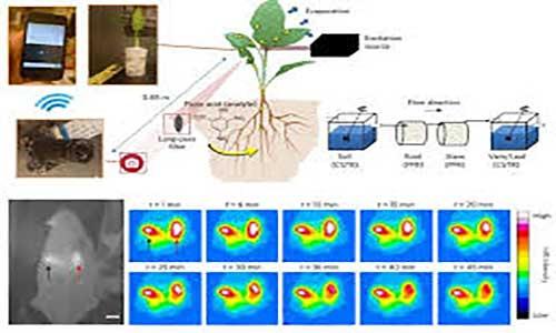 طراحی اسفناج با روشهای زیست فناوری برای تشخیص مواد منفجره