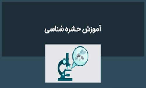 آموزش حشره شناسی
