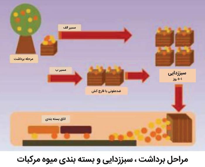 مراحل برداشت ، سبززدایی و بسته بندی میوه مرکبات