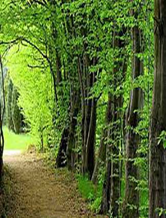 اطلاعات تخصصی و علمی جنگلهای ایران